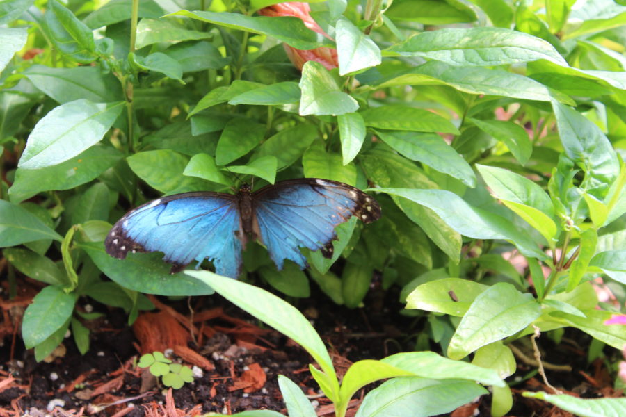 Original Mackinac Island Butterfly House