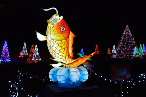 fish in the festival of lights Niagara Falls