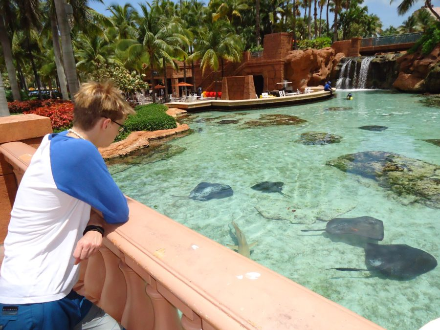 rays at Atlantis Bahamas