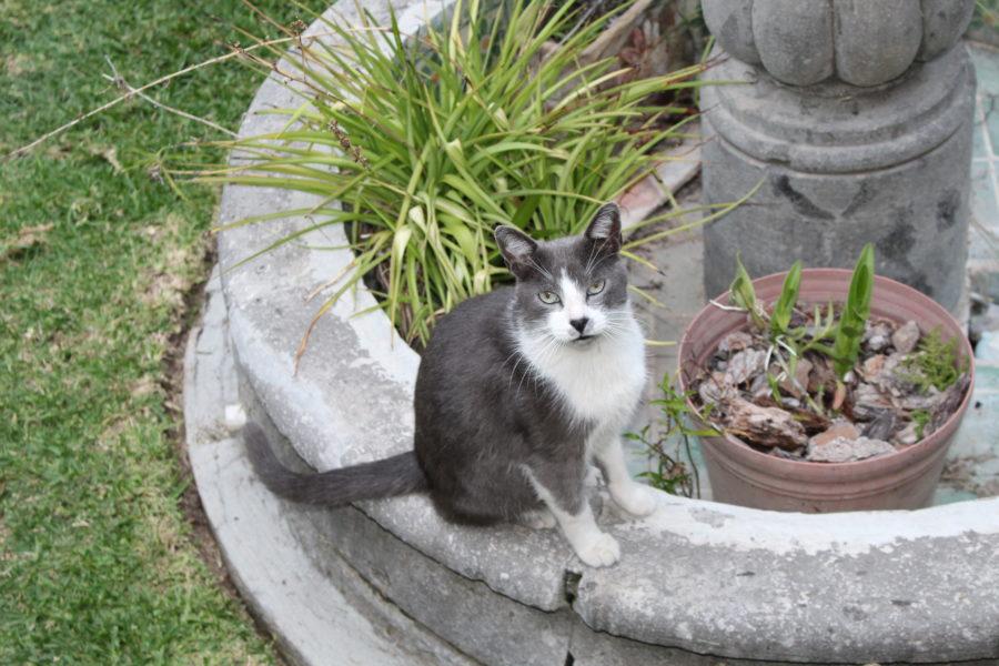 cat outside in Ajijic Mexico