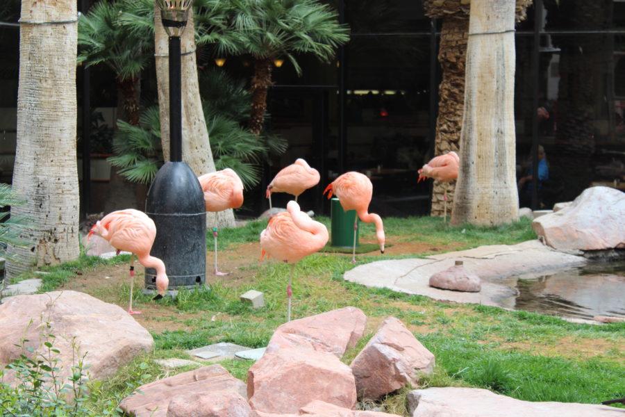 wildlife habitat Las Vegas