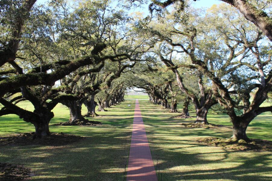 Oak trees at Oak Alley Plantation
